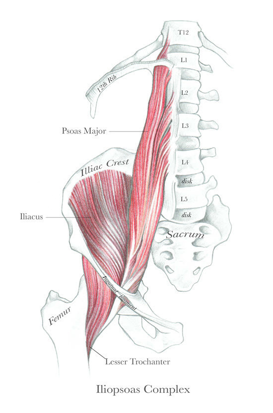 Anatomy of a Centered Body: Resolving Structural Imbalances of the Core Body Parts I & II: The Psoas and The Cylinder of Support